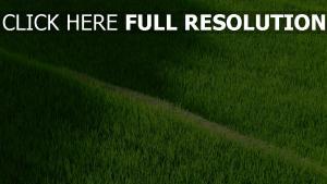 gras trail reisfelder plantagen