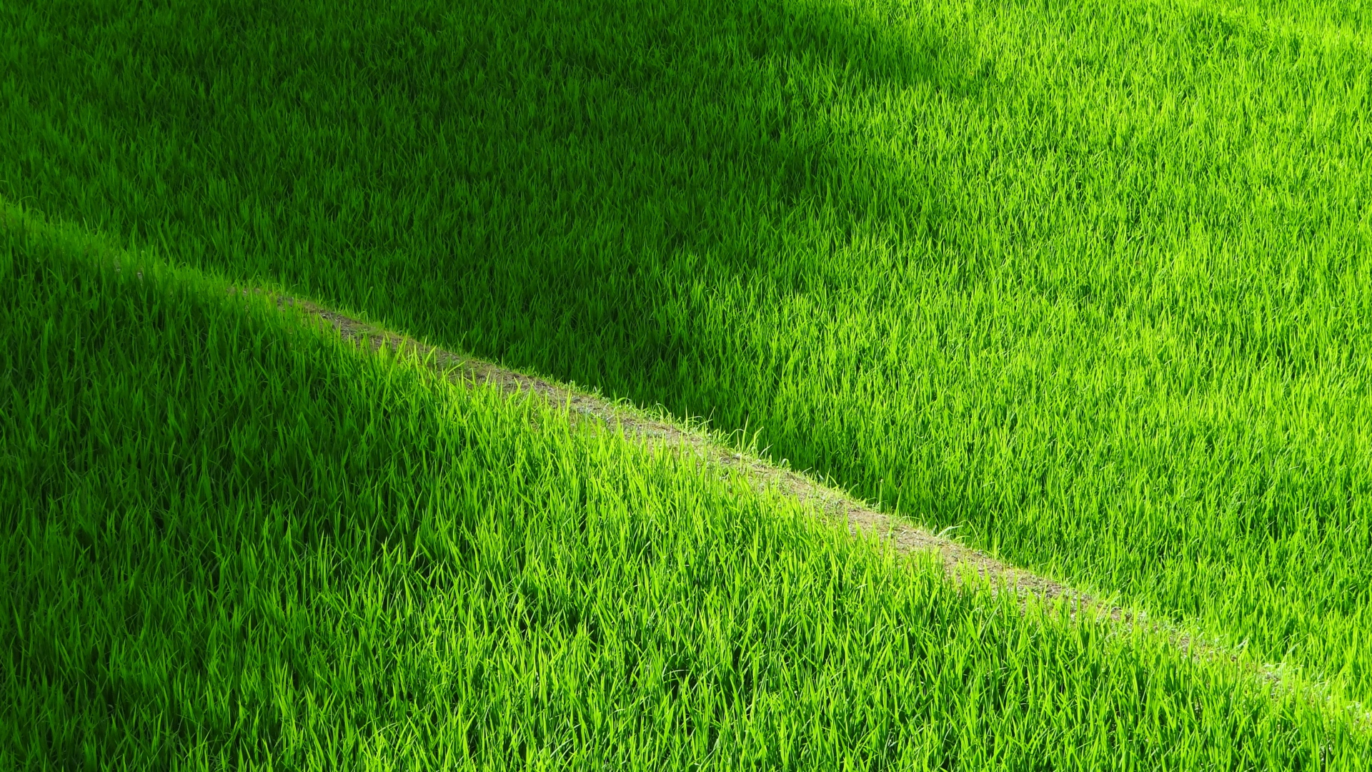 hd hintergrundbilder gras trail reisfelder plantagen 1920x1080