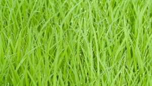 gras tropfen tau grün wasser