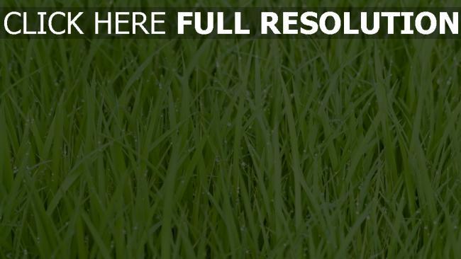 hd hintergrundbilder gras tropfen tau grün wasser