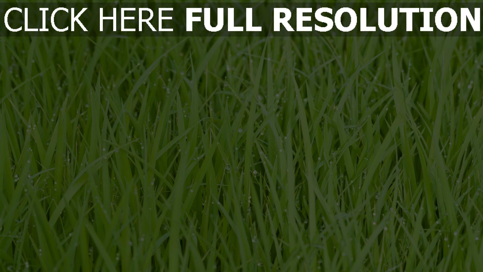 hd hintergrundbilder gras tropfen tau grün wasser 1920x1080