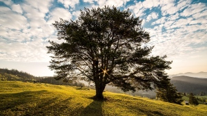bäume hügel himmel wolken gras rumänien