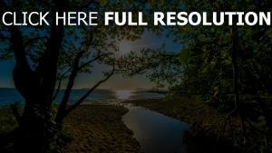 bäume blätter strahlen sonne sommer meer strand