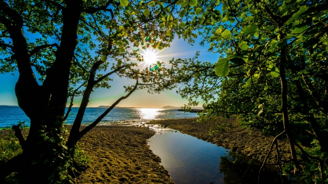 hd hintergrundbilder bäume blätter strahlen sonne sommer meer strand
