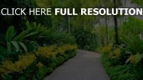 botanischer garten bäume weg singapur