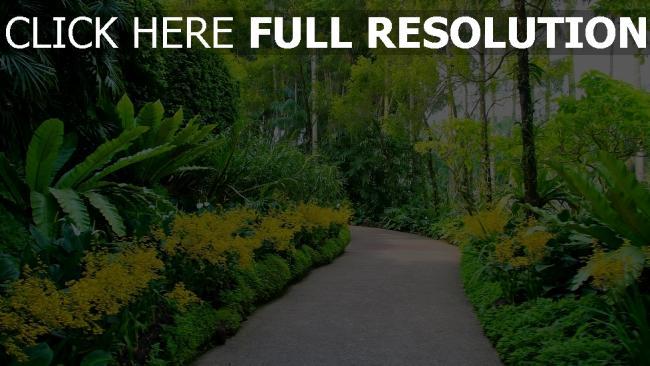 hd hintergrundbilder botanischer garten bäume weg singapur