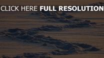 schnee winter tracks kalt