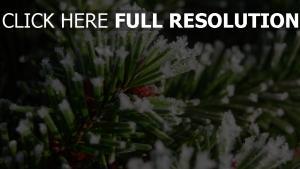 nadeln nadeln schnee winter close-up