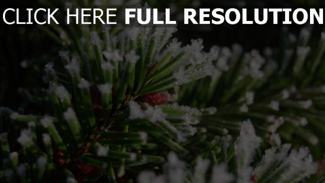 hd hintergrundbilder nadeln nadeln schnee winter close-up