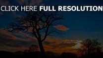 baum himmel sonnenuntergang silhouette wolken
