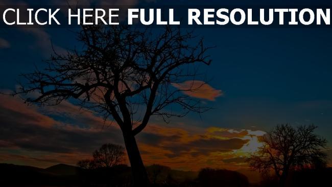 hd hintergrundbilder baum himmel sonnenuntergang silhouette wolken