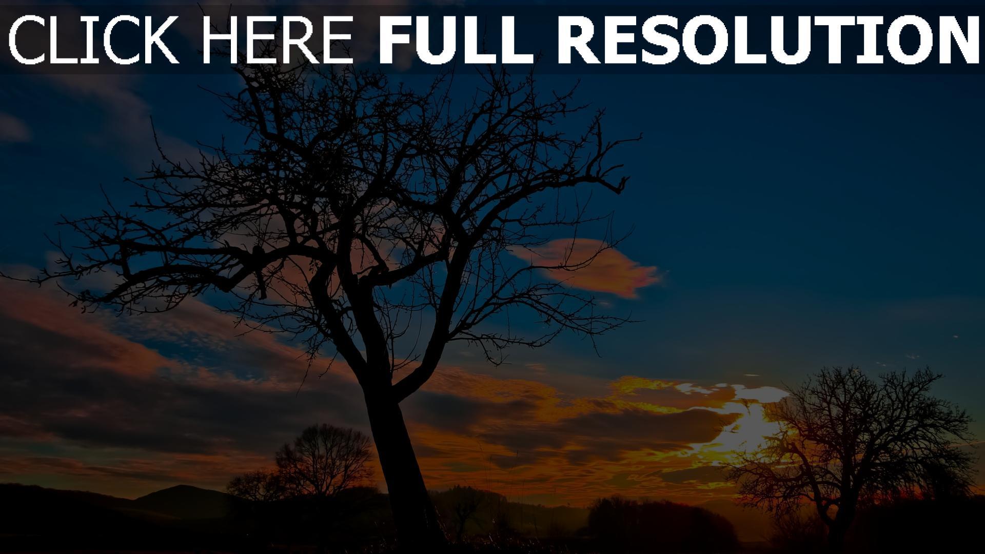 hd hintergrundbilder baum himmel sonnenuntergang silhouette wolken 1920x1080