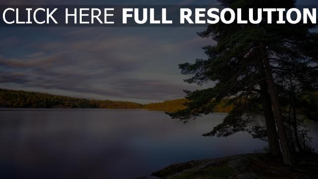 hd hintergrundbilder see himmel strand wald baum tanne schweden