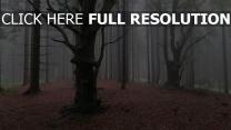 nebel wald bäume herbst kiefern