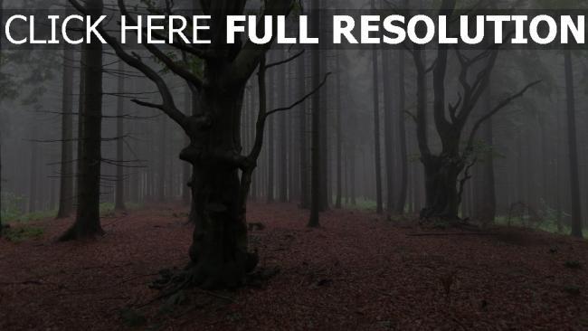 hd hintergrundbilder nebel wald bäume herbst kiefern