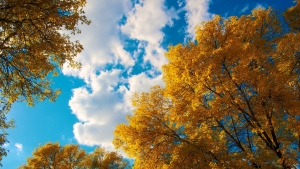 bäume blätter herbst himmel