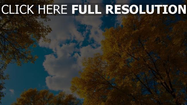 hd hintergrundbilder bäume blätter herbst himmel