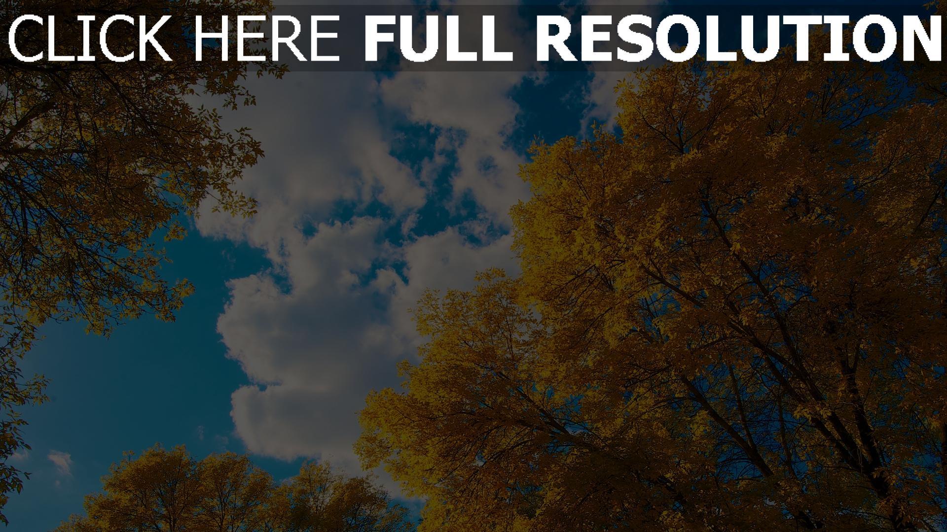 hd hintergrundbilder bäume blätter herbst himmel 1920x1080