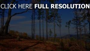 bäume himmel herbst kiefern