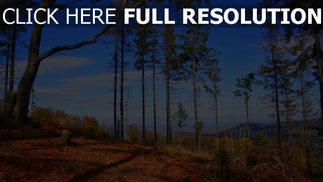 hd hintergrundbilder bäume himmel herbst kiefern