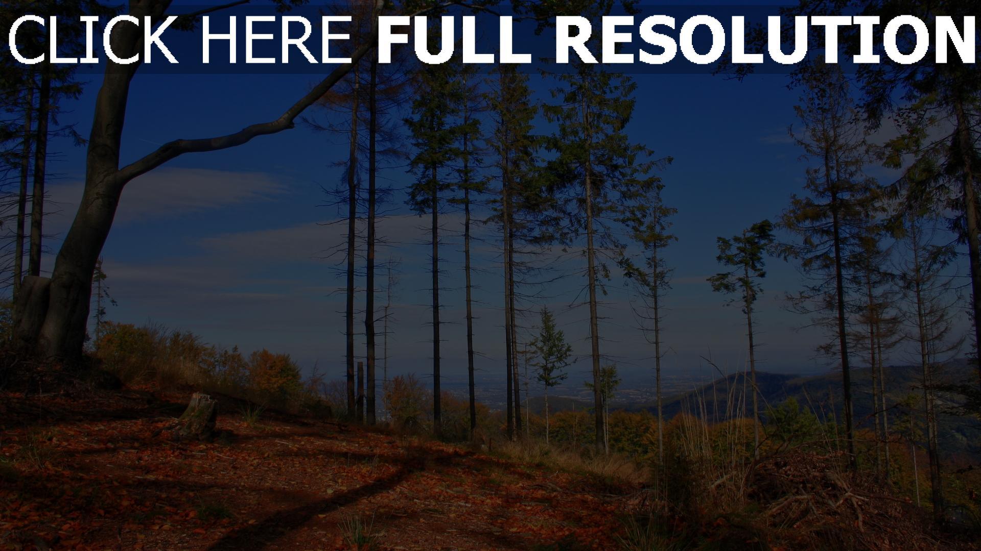 hd hintergrundbilder bäume himmel herbst kiefern 1920x1080