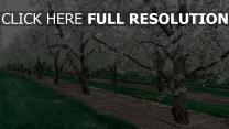 garten bäume frühling blüten blüten zweige