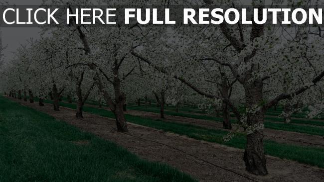 hd hintergrundbilder garten bäume frühling blüten blüten zweige