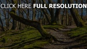 bäume gras moos fußweg steigung