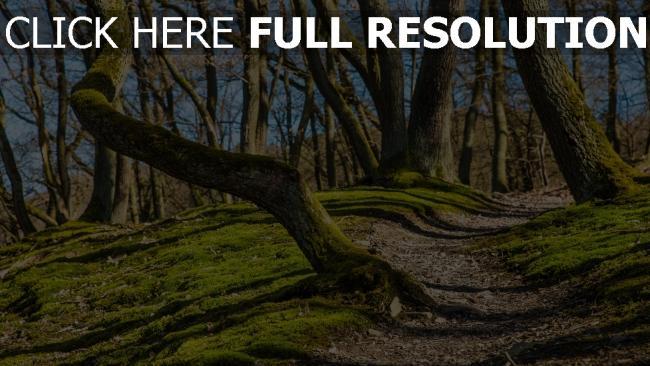 hd hintergrundbilder bäume gras moos fußweg steigung
