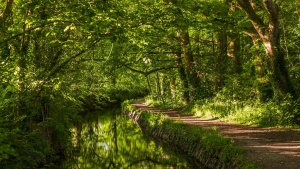 fluss straße wald bäume sommer laub england