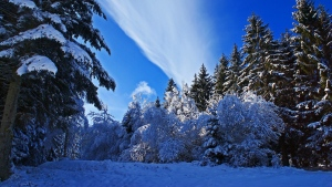 wald bäume schnee fichte himmel wolken