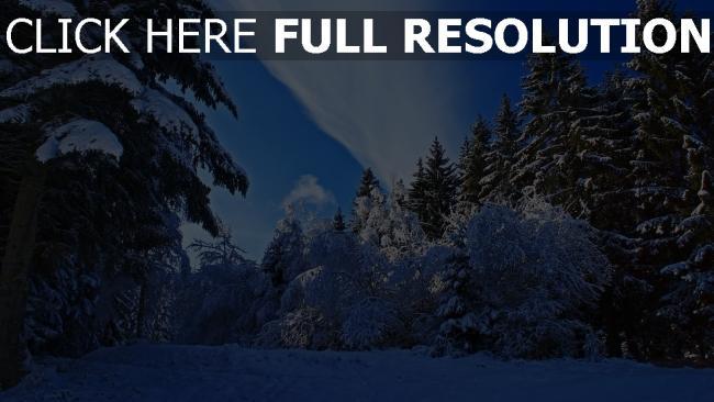hd hintergrundbilder wald bäume schnee fichte himmel wolken