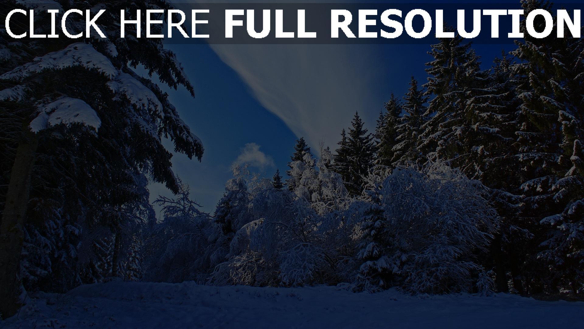 hd hintergrundbilder wald bäume schnee fichte himmel wolken 1920x1080