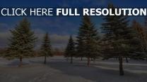 fichte schnee winter holz