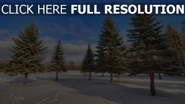 hd hintergrundbilder fichte schnee winter holz