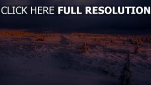 winter schnee himmel wolken tanne glühen
