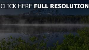berg see nebel wald fichte