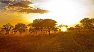 straße bäume sand afrika
