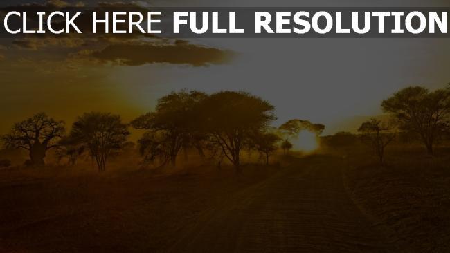 hd hintergrundbilder straße bäume sand afrika