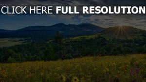 berge sonne strahlen blumen blühen wiese arizona