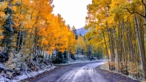 herbst straße bäume aspen colorado