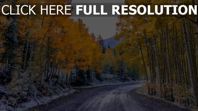 hd hintergrundbilder herbst straße bäume aspen colorado