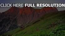 berge felsen österreich wiese blühen blumen
