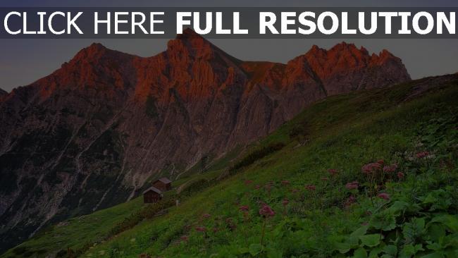 hd hintergrundbilder berge felsen österreich wiese blühen blumen