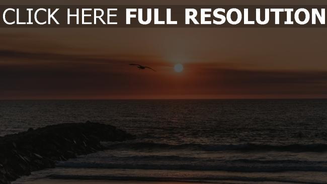 hd hintergrundbilder flug meer sonnenuntergang vogel