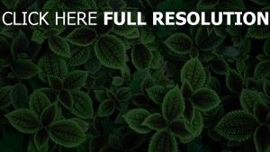blätter grün pflanze