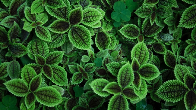 hd hintergrundbilder blätter grün pflanze