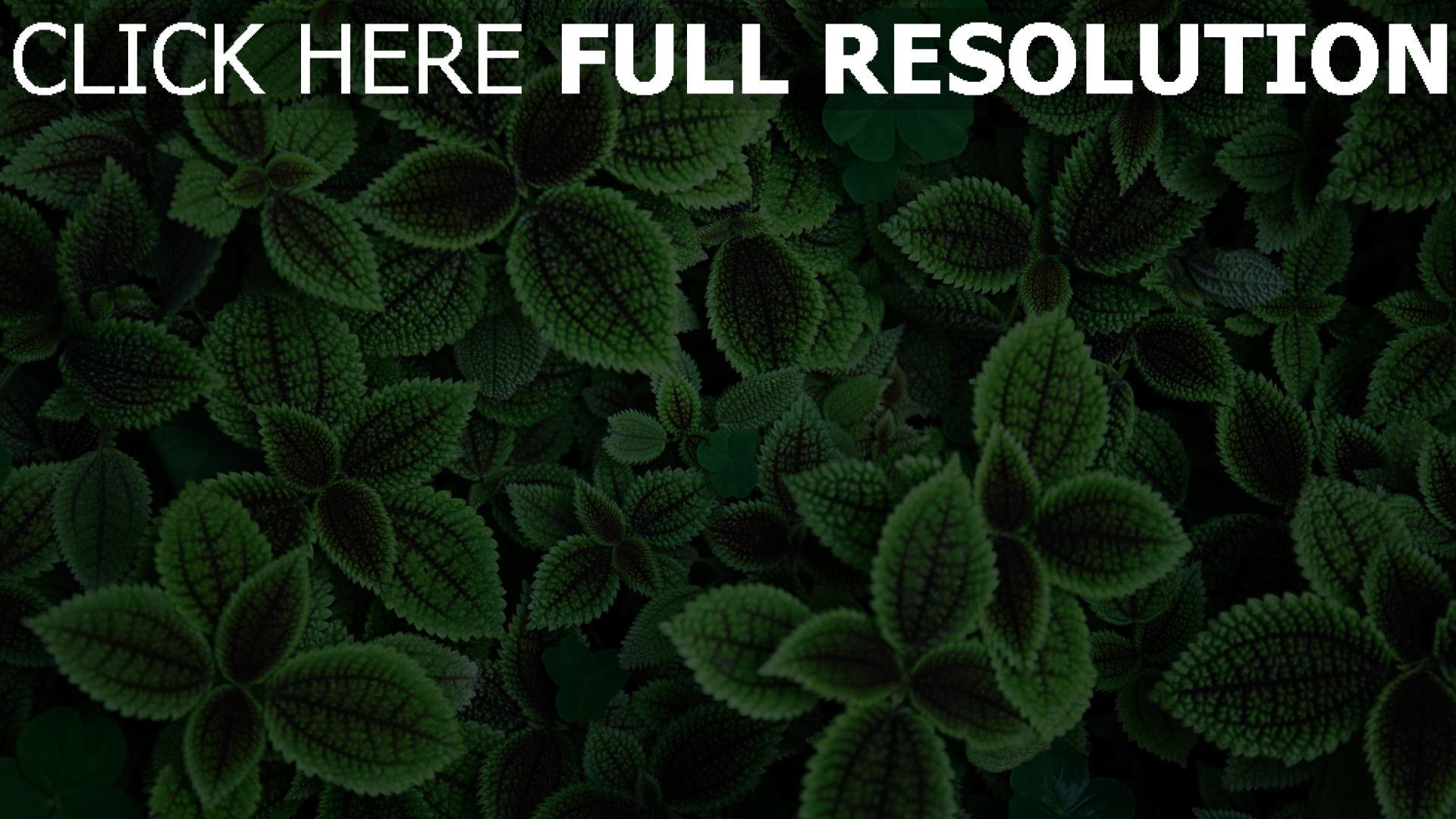 hd hintergrundbilder blätter grün pflanze 1920x1080