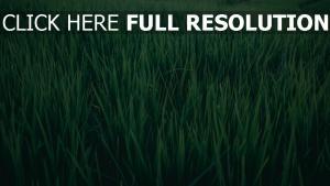 grün gras feld