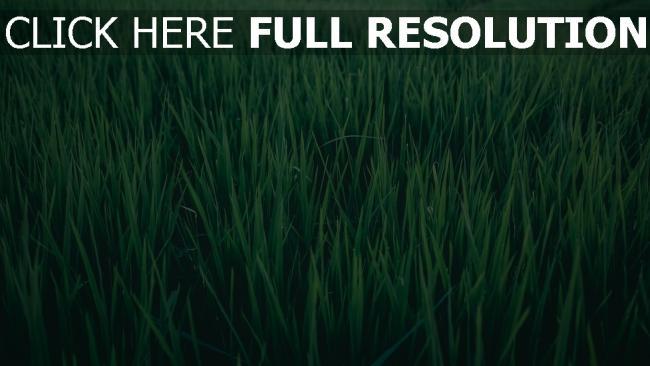 hd hintergrundbilder grün gras feld